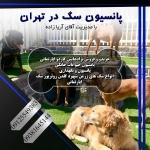 پانسیون سگ در تهران