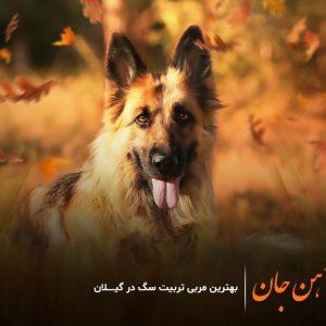 بهترین مربی سگ